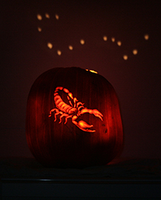 Scorpion carved into pumpkin with constellation in background